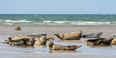 "John Prodger ""Blakeney Seals"""